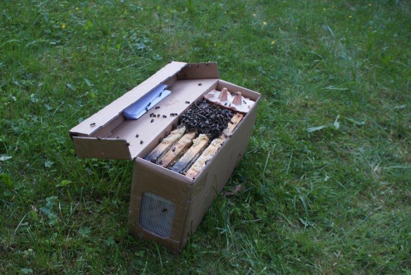 Paket Arıcılık ve Ana Arı
