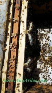 karniyol arı
