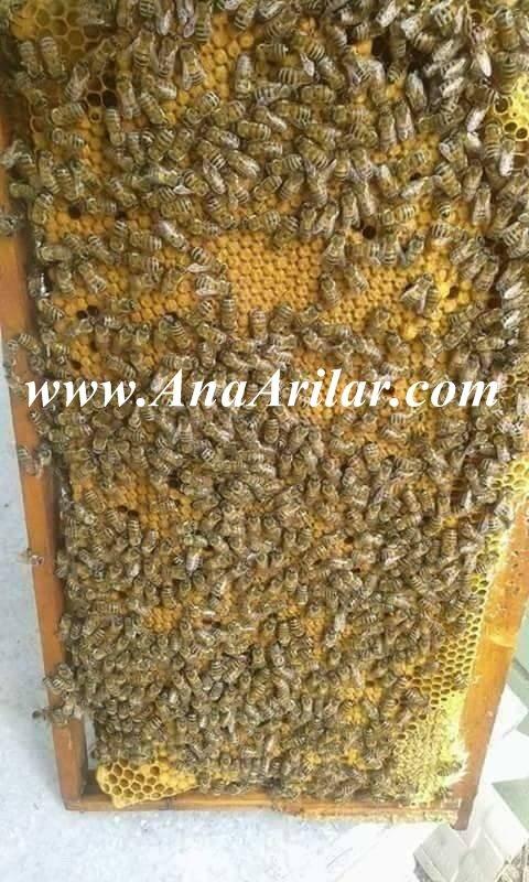 arı satısı