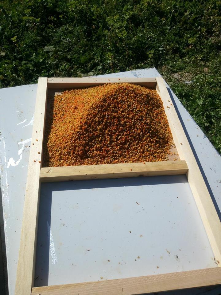 polen üretenler