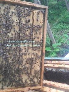 arı satan firmalar