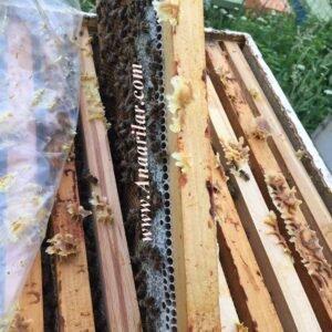 9 çerçeve paket arı
