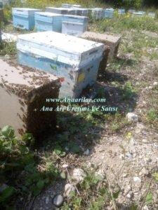 arı satıanlar