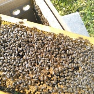 Paket arı