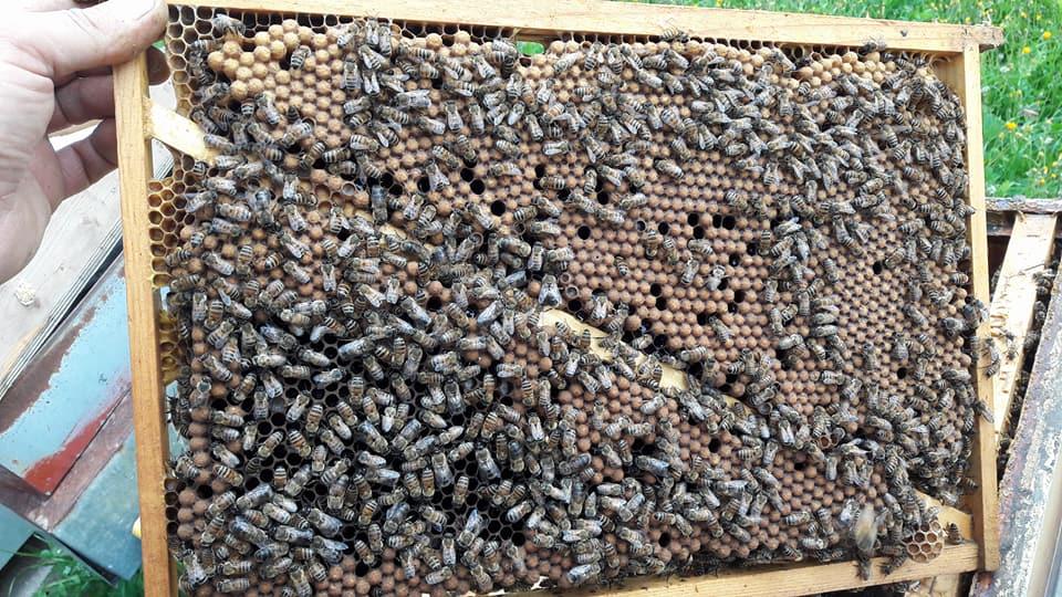 erkek arı üretimi