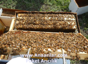 paket arı 9 çerçeve
