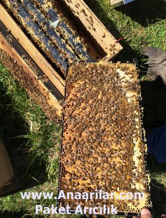 Paket arı satısı