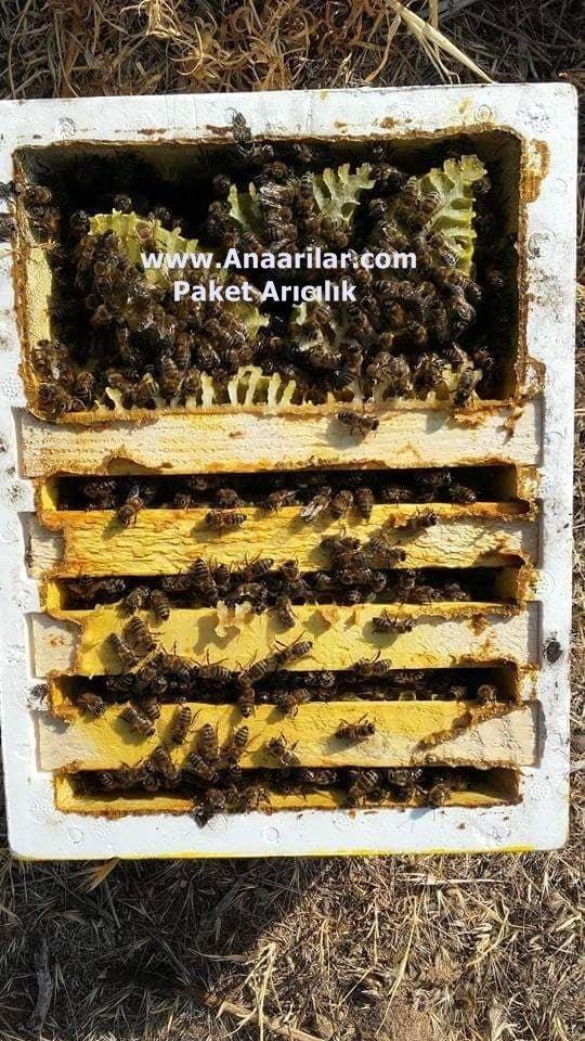 Ana Arı Üretimi-Çiftleştirme Kutuları
