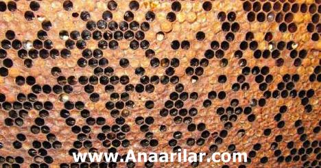 Arılarda Kovan Terki