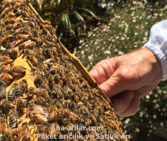 Arılarda ilk bahar bakımı