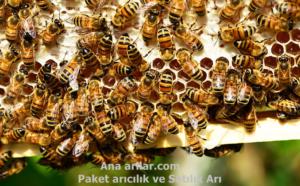 Yaz ayında arı bakımı